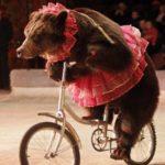 Stop al circo con gli animali a Parigi. Esempio da seguire