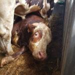 ACTION! Firma contro l'esportazione di animali vivi
