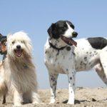 Più spazi a misura di cane? Ci pensa il Dog manager Ihod