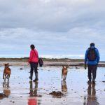 Doggys, l'app gratuita per organizzare passeggiate a sei zampe