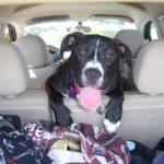 Animali in auto, scarica la guida per viaggiare con loro