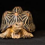 Animali, le nuove specie protette dalla Cites