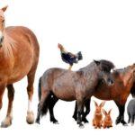 Il 10 dicembre è la Giornata per i diritti degli animali