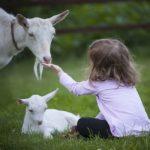 L'educazione al rispetto per gli animali entra nelle scuole