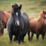 Cavalli, qualche curiosità
