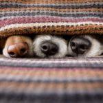 Dona una coperta a un rifugio