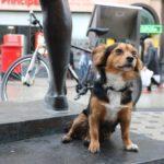 """""""Animali in città 2019"""", ecco dove il pet vivono meglio"""