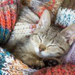 Ecco la guida pratica per il gatto di casa