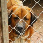 Animali. Reato di abbandono, un caso di esclusione di tenuità
