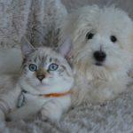 Gli animali da compagnia non diffondono il nuovo coronavirus