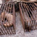 La Cina verso il divieto di commercio di animali selvatici