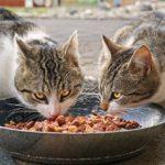 Coronavirus, è lecita e doverosa la cura delle colonie feline