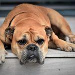 Separazione e abbandono di animali, una sentenza
