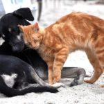 Coronavirus, il front-desk Lav in aiuto degli animali