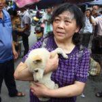 In Cina non si potranno più mangiare cani e gatti (per ora)