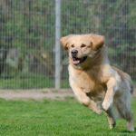 Animali, il Ministero Salute fa ripartire adozioni e staffette