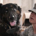 Dall'Esercito al divano. Adotta un cane con le stellette