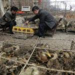 Wuhan per 5 anni vieta il consumo di animali selvatici