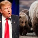 Caccia. Trump toglie protezioni a orsi e lupi
