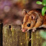 Messaggio da un topo
