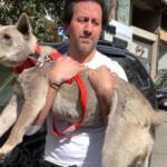 A Beirut volontari in soccorso degli animali