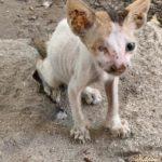 Petizione per fermare la strage di cani e gatti a Dubai