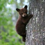 La vera storia dell'orsetto Sandrino, simbolo del Pnalm